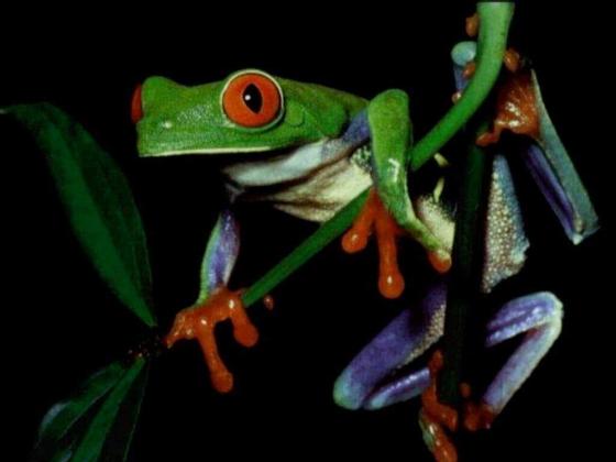 Ultimate Stockfrog